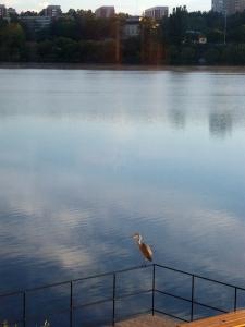 2011-09-01 Heron-03